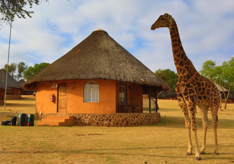 rencontres en Afrique du Sud singles rencontre une nana hippie