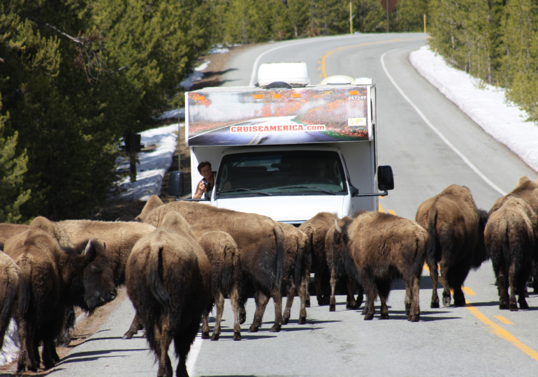 Bison route 66